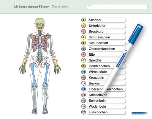 1 Kugelschreiber Knochen Skelett Körper Mensch Humor Geschenk Neu