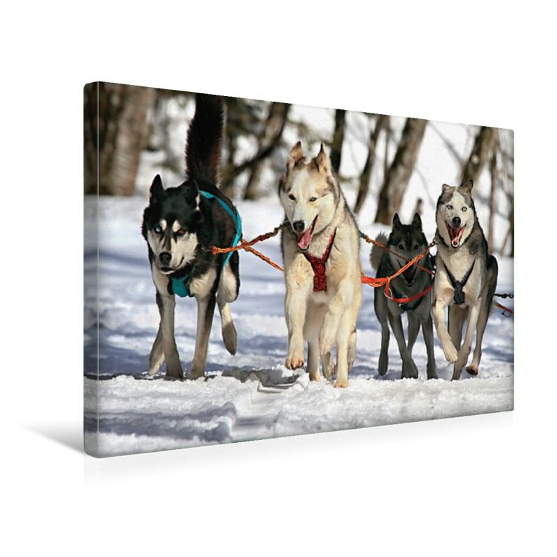 Premium Textil-Leinwand 45 cm x 30 cm quer Huskies