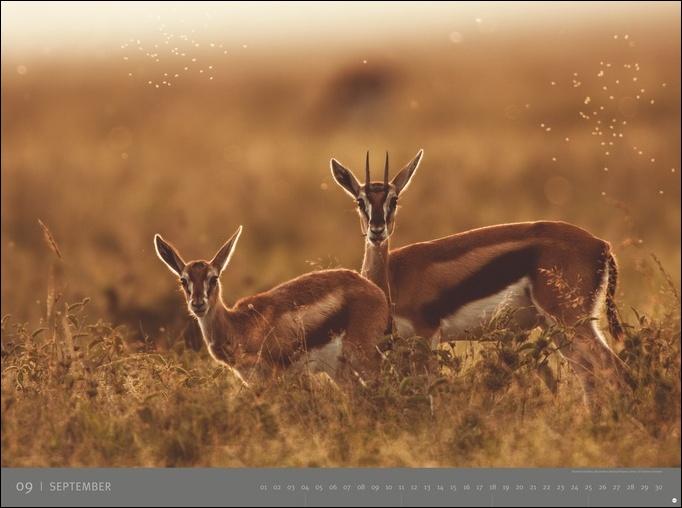 Afrika - Edition Alexander von Humboldt Kalender 2022