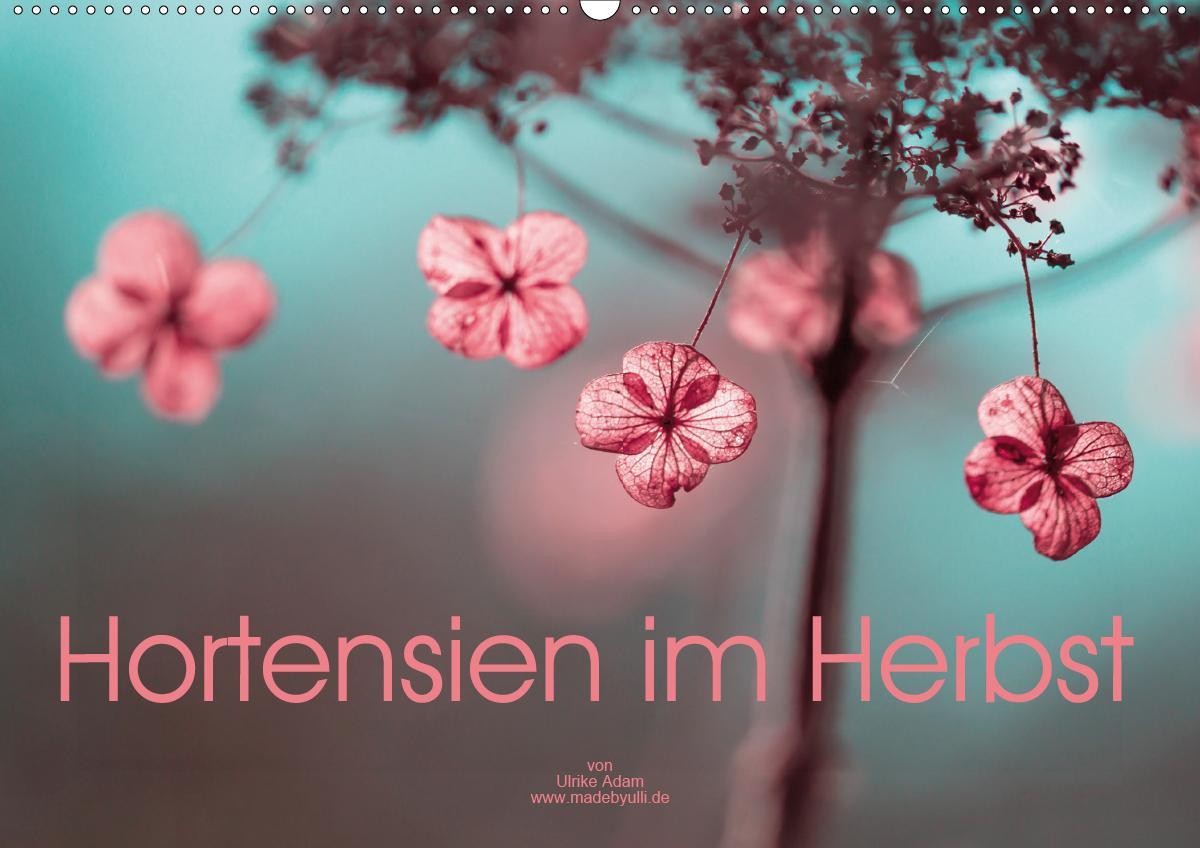 Hortensien im Herbst (Wandkalender 2021 DIN A2 quer)