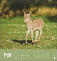 Esel Postkartenkalender 2022