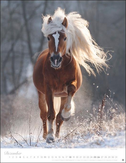 Pferde Classics Kalender 2022