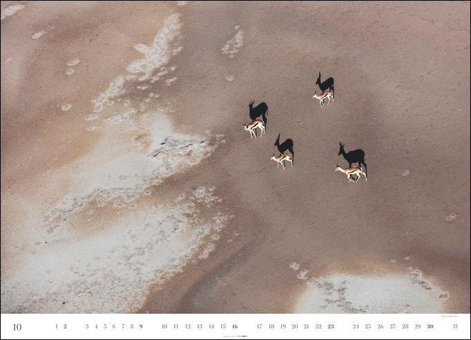 Animal Journeys Kalender 2022