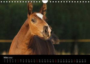 Faszinierende Pferde 2022 (Wandkalender 2022 DIN A4 quer)