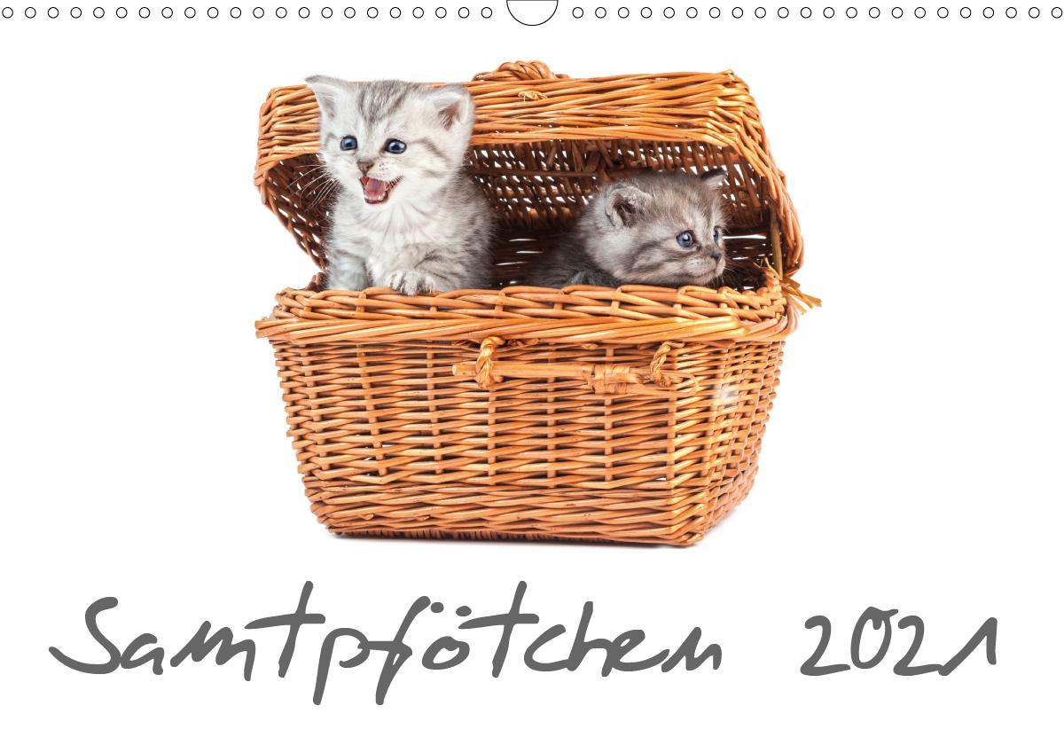 Samtpfötchen (Wandkalender 2021 DIN A3 quer)