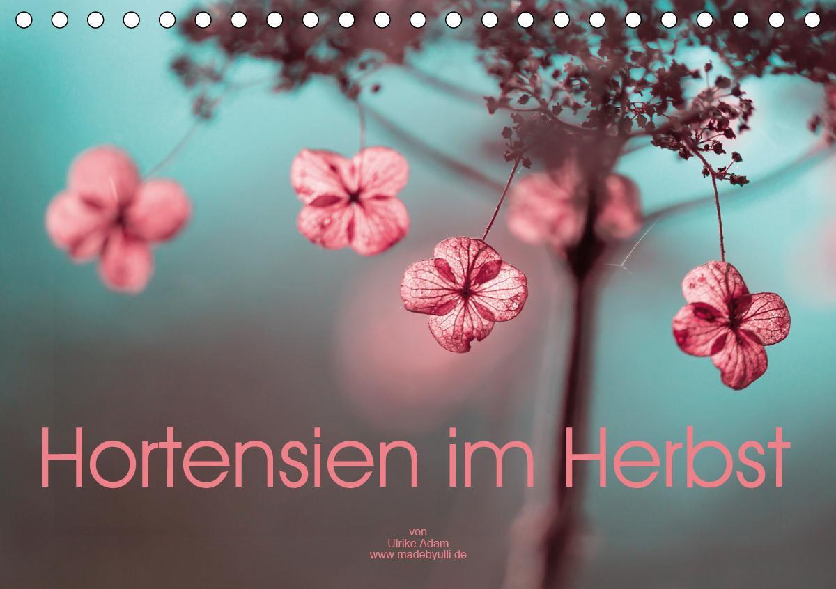 Hortensien im Herbst (Tischkalender 2021 DIN A5 quer)