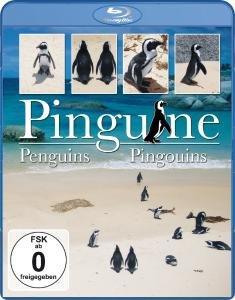 Pinguine, 1 Blu-ray