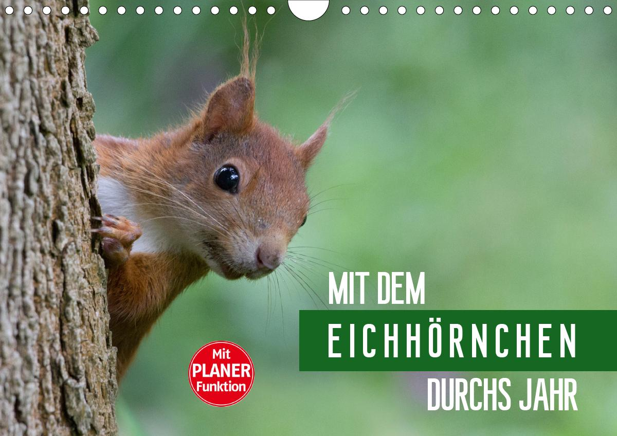 Mit dem Eichhörnchen durchs Jahr (Wandkalender 2021 DIN A4 quer)