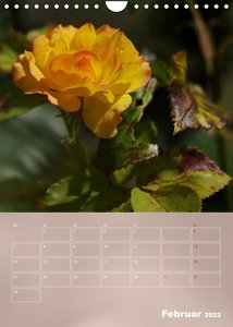 Zarte Schönheiten - Rosen (Wandkalender 2022 DIN A4 hoch)