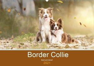 Border Collie - Bunt und clever! (Wandkalender 2021 DIN A2 quer)