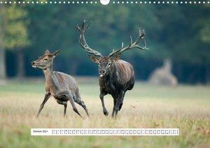 Faszination Hirschbrunft (Wandkalender 2021 DIN A3 quer)