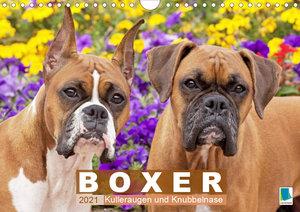 Boxer: Kulleraugen und Knubbelnase (Wandkalender 2021 DIN A4 que