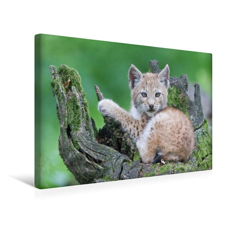 Premium Textil-Leinwand 45 cm x 30 cm quer Luchs