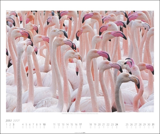 Welt der Vögel Kalender 2022