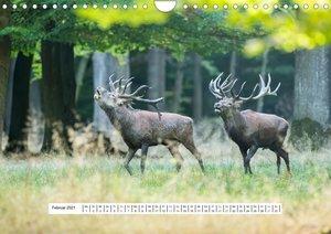 Faszination Hirschbrunft (Wandkalender 2021 DIN A4 quer)