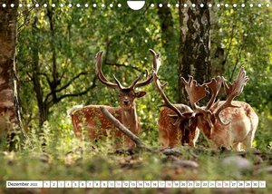 Der Damhirsch - Der Schaufelträger des Waldes (Wandkalender 2022 DIN A4 quer)