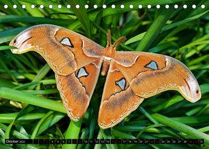 Fliegende Wunderwesen. Schmetterlinge weltweit, ganz nah (Tischkalender 2022 DIN A5 quer)