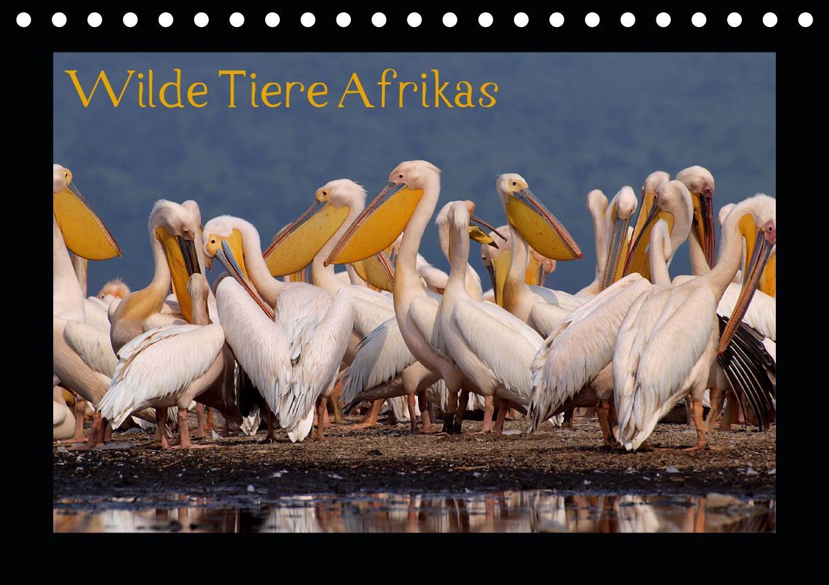 Wilde Tiere Afrikas (Tischkalender 2021 DIN A5 quer)
