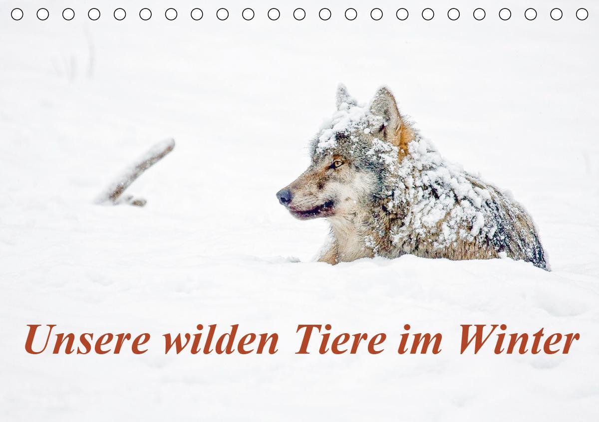 Unsere wilden Tiere im Winter (Tischkalender 2021 DIN A5 quer)