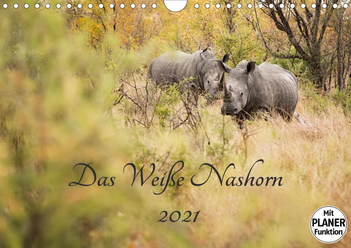 Das Weiße Nashorn (Wandkalender 2021 DIN A4 quer)