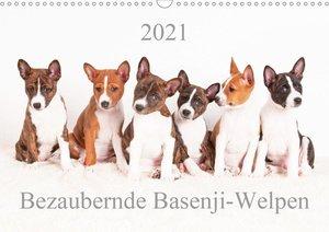 Bezaubernde Basenji-Welpen (Wandkalender 2021 DIN A3 quer)