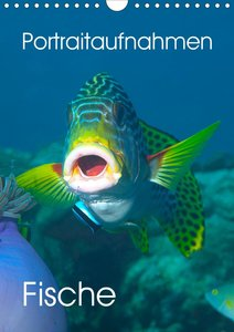 Portraitaufnahmen - Fische (Wandkalender 2021 DIN A4 hoch)