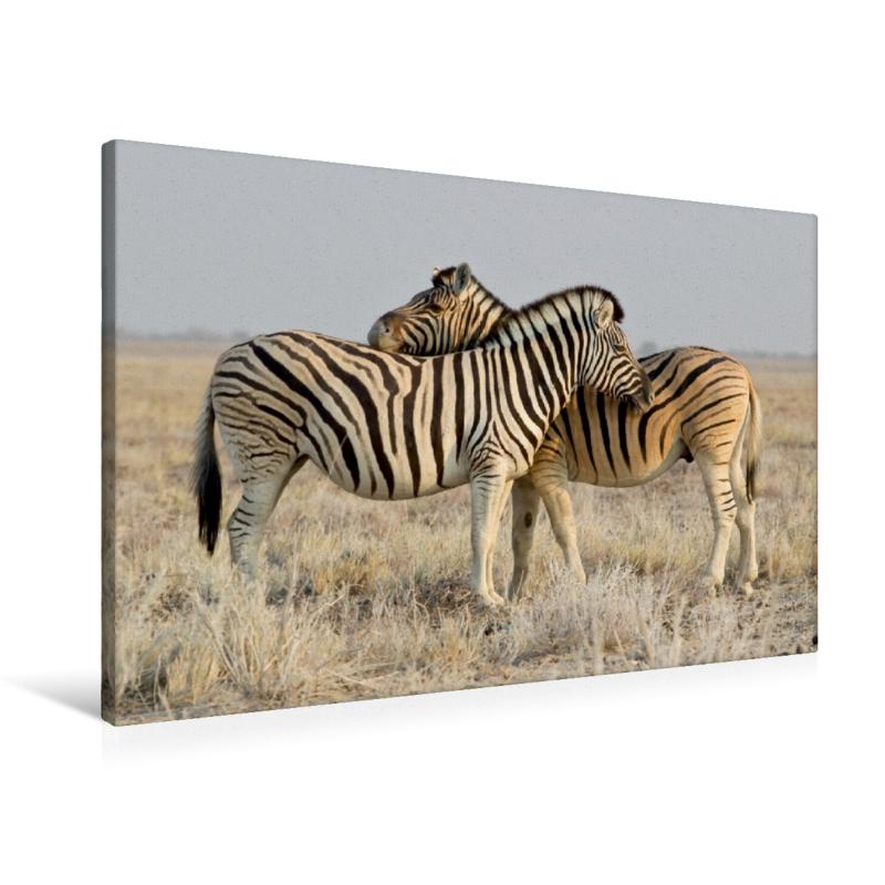 Premium Textil-Leinwand 90 cm x 60 cm quer Zebras