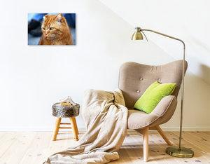 Premium Textil-Leinwand 45 cm x 30 cm quer Hauskater Felix ist e