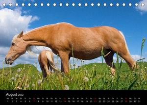 Wunderschöne Haflingerwelt (Tischkalender 2022 DIN A5 quer)