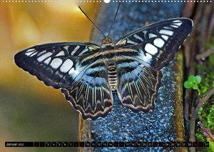Fliegende Wunderwesen. Schmetterlinge weltweit, ganz nah (Wandkalender 2022 DIN A2 quer)