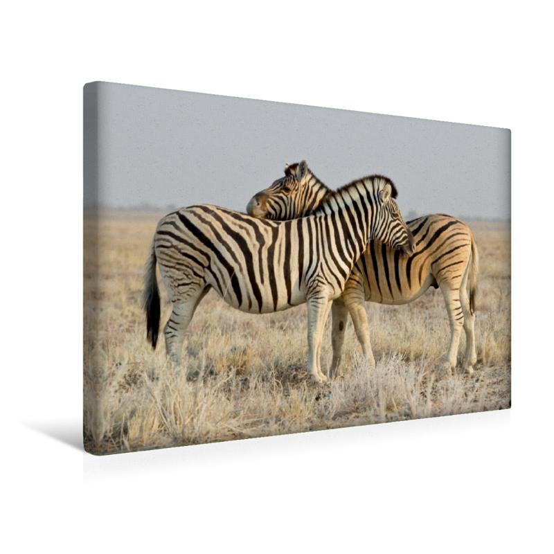 Premium Textil-Leinwand 45 cm x 30 cm quer Zebras