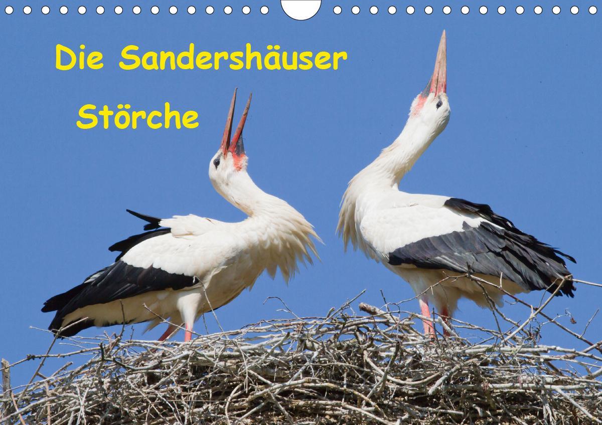 Die Sandershäuser Störche (Wandkalender 2021 DIN A4 quer)