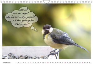 Vögel mit Humor (Wandkalender 2022 DIN A4 quer)
