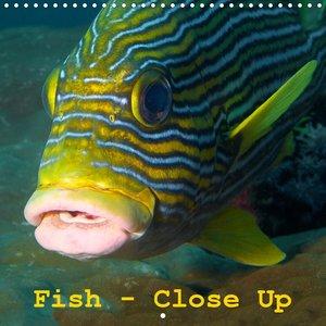 Fish - Close Up (Wall Calendar 2021 300 × 300 mm Square)
