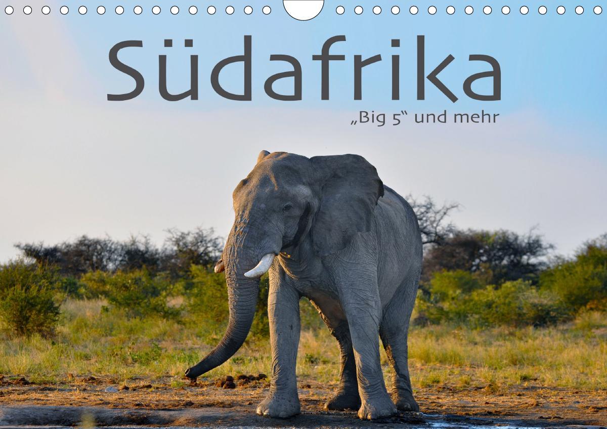 Südafrika - Big 5 und mehr (Wandkalender 2021 DIN A4 quer)