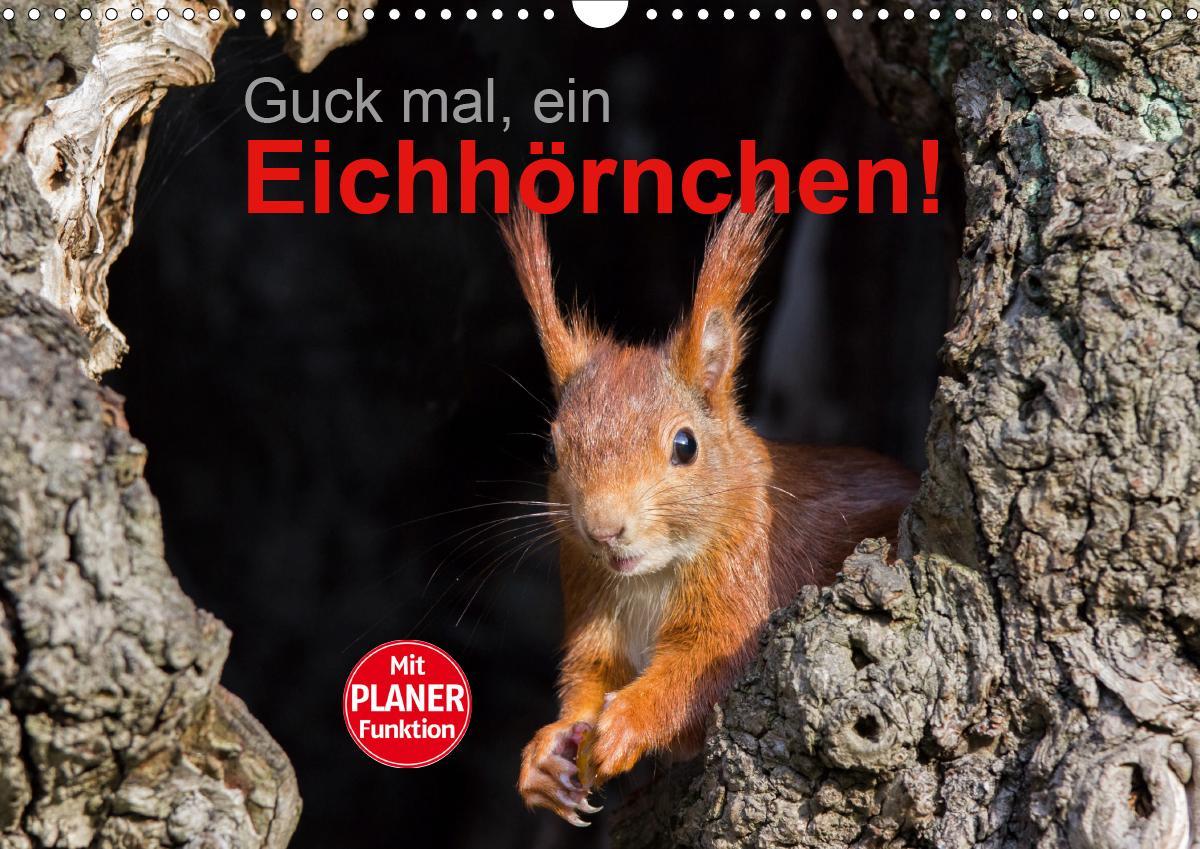 Guck mal, ein Eichhörnchen! (Wandkalender 2021 DIN A3 quer)