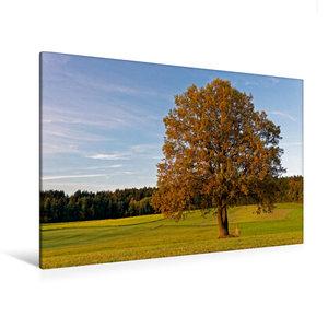 Premium Textil-Leinwand 120 cm x 80 cm quer Herbstwiese nahe Neusch?nau