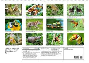 Leben im Urwald: ein Paradies für Tiere (Wandkalender 2022 DIN A