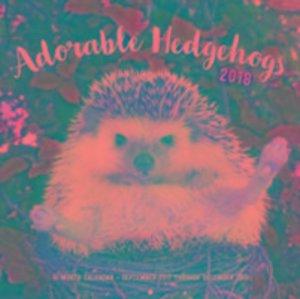 Adorable Hedgehogs 2018