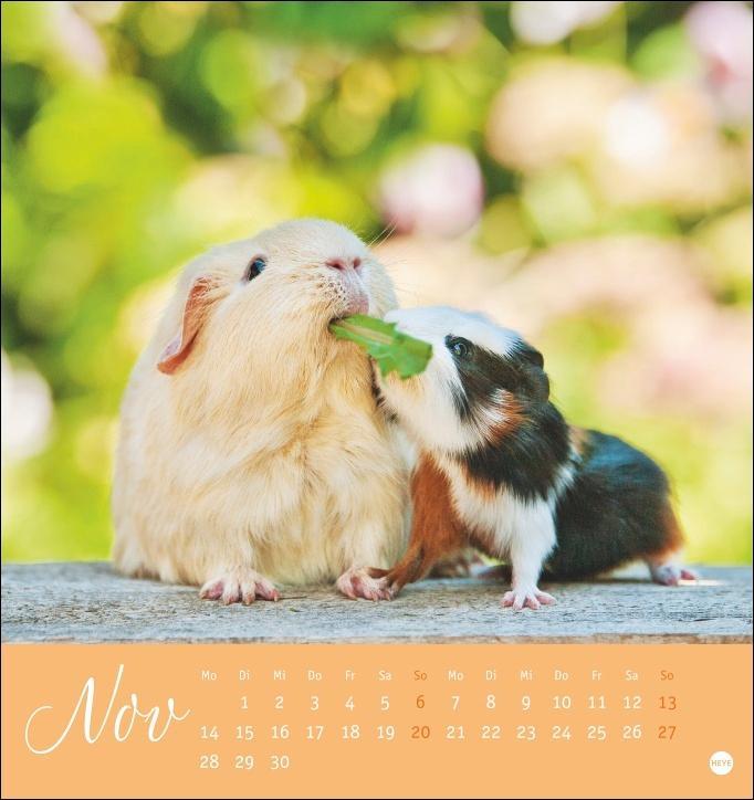 Kuschelige Meerschweinchen Postkartenkalender 2022