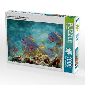 CALVENDO Puzzle Buntes Treiben der Fahnenbarsche 1000 Teile Puzzle quer