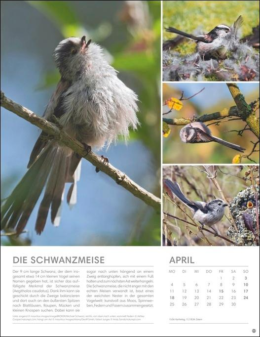 Vögel in unseren Gärten Posterkalender 2022