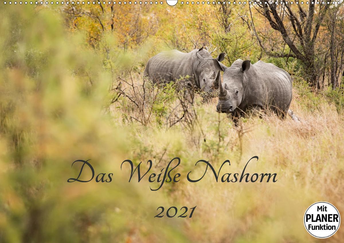 Das Weiße Nashorn (Wandkalender 2021 DIN A2 quer)