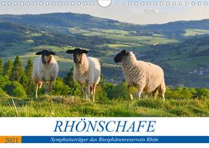Rhönschafe - Symphatieträger des Biosphärenreservats Rhön (Wandk