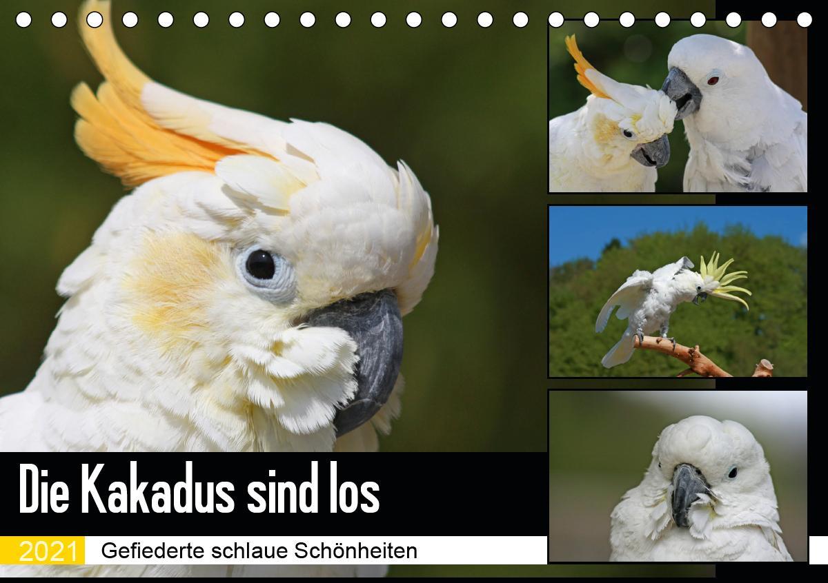 Die Kakadus sind los (Tischkalender 2021 DIN A5 quer)