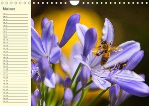 Fleißige Bienen. Von der Blüte bis zum Honig (Wandkalender 2022 DIN A4 quer)