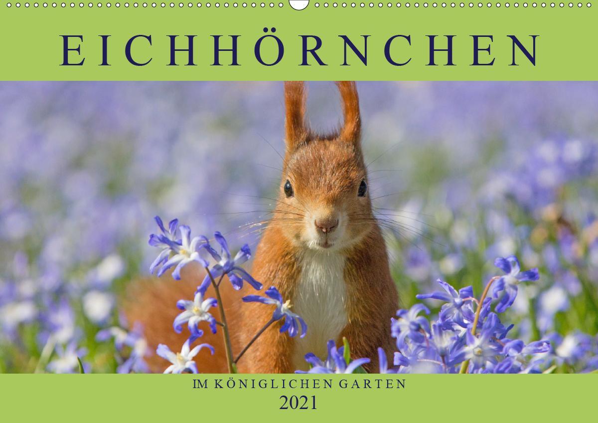 Eichhörnchen im Königlichen Garten (Wandkalender 2021 DIN A2 que