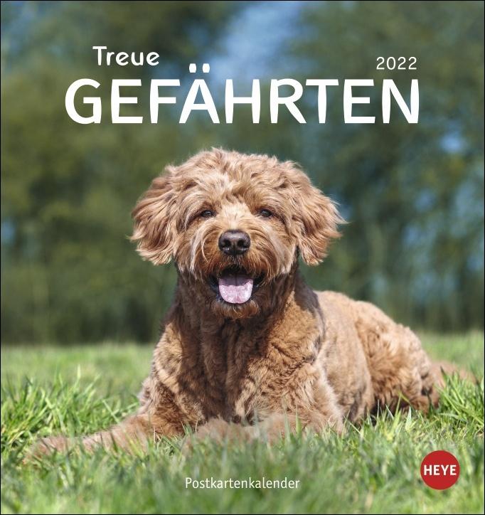 Hunde Postkartenkalender - Treue Gefährten 2022