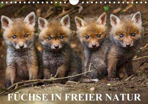 Füchse in freier Natur (Wandkalender 2021 DIN A4 quer)