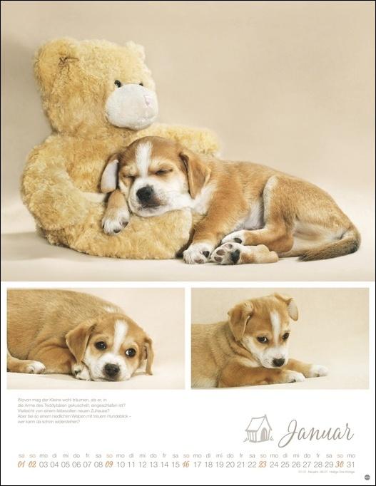 Hundekinder Posterkalender 2022